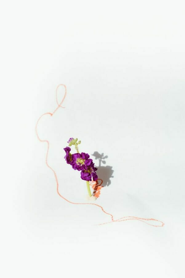 purple and white flowers on white background