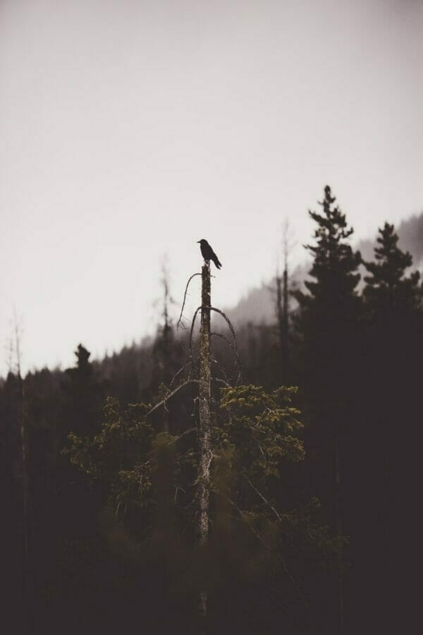 black bid perching on top of tree