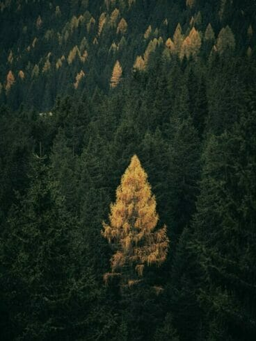 green and brown trees near mountain during daytime